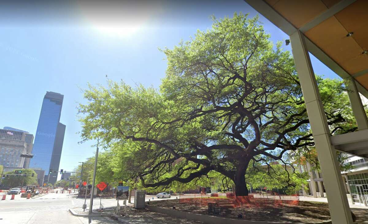 """The """"Old Hanging Tree"""" did a lot less hanging than legend tells."""