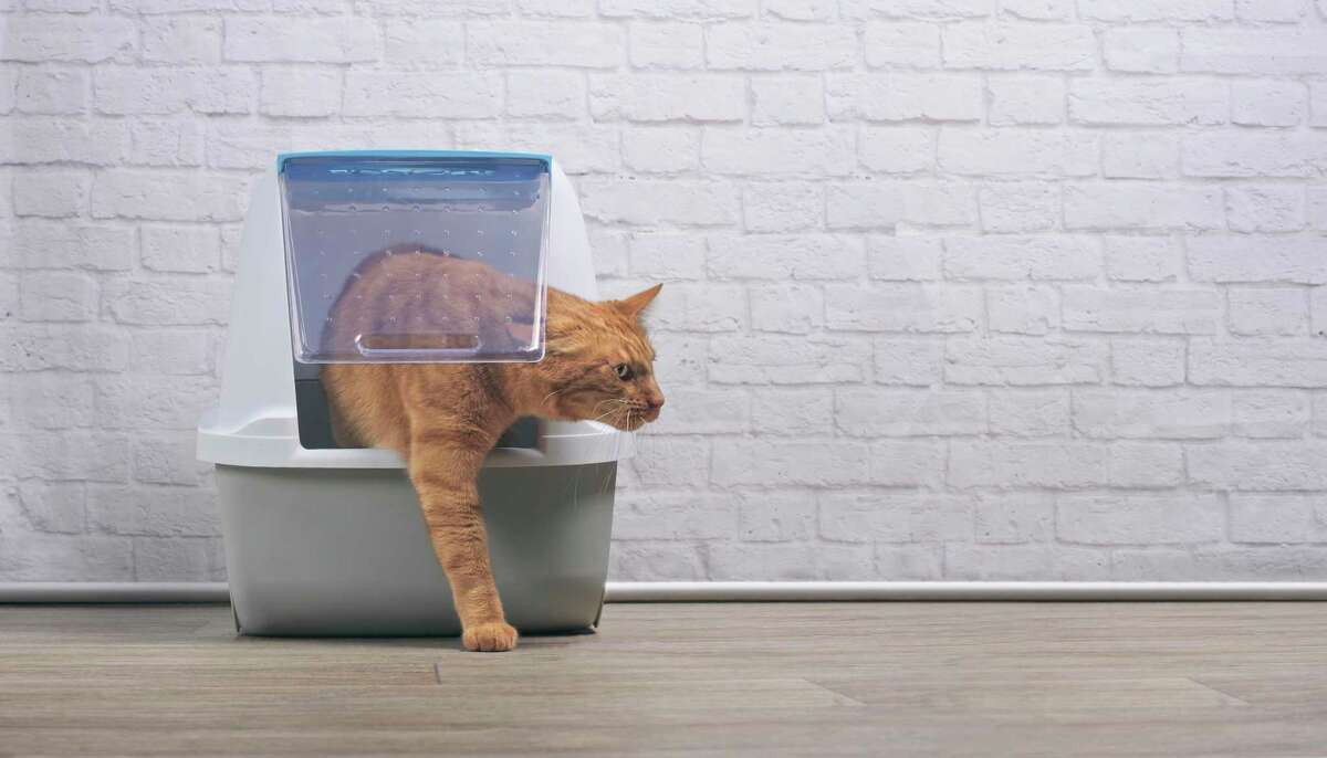 When a cat stops using the litter box, there are several things you can do.