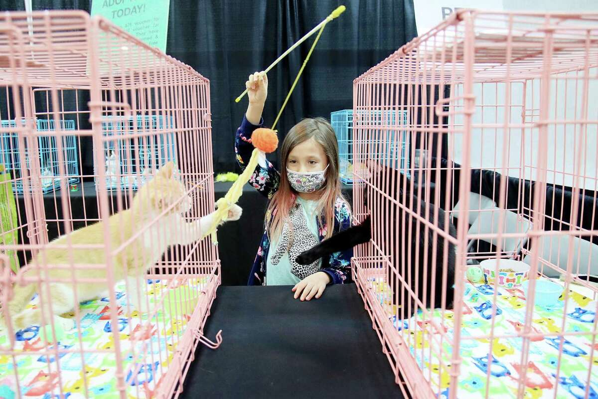Lainey Adair plays with kittens at a 2020 cat show presented by the Gulf Coast Feline Foundation at the Jimmy Burke Activity Center in Deer Park. The show returns Aug. 28-29 with more than 200 cats representing over 40 breeds.