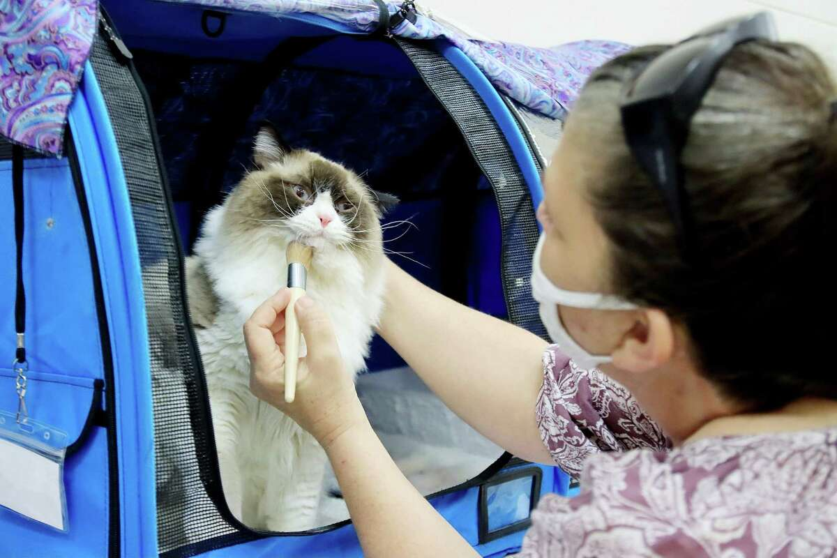 Lynda Eubanks gets her cat ready for a previous cat show.