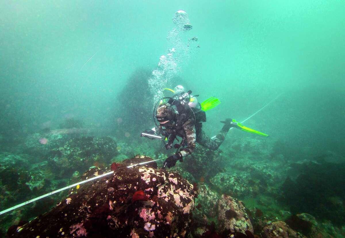 Morgan Murphy-Canella surveys a bull kelp restoration site at Noyo Bay in Fort Bragg (Mendocino County).