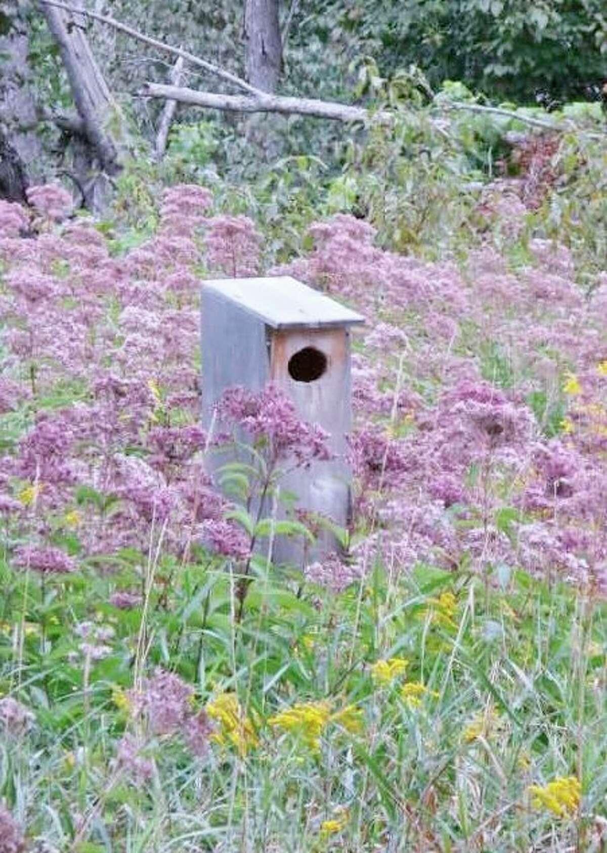 Duck box in Joe-Pye weed. (Photo provided/McLean Nature Preserve)