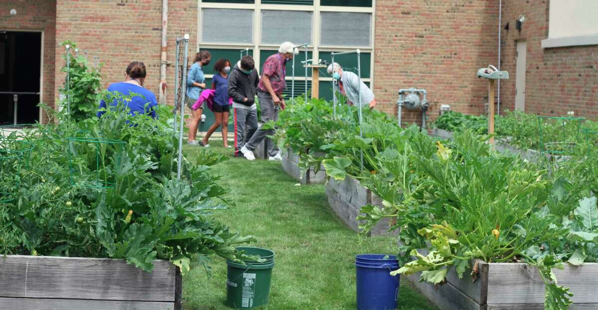 The Spirit of the Woods Garden Club received several awards for the work it did in conjunction with the the Armory Youth Project and members of the community to grow vegetables for food banks in Manistee County. (File photo)