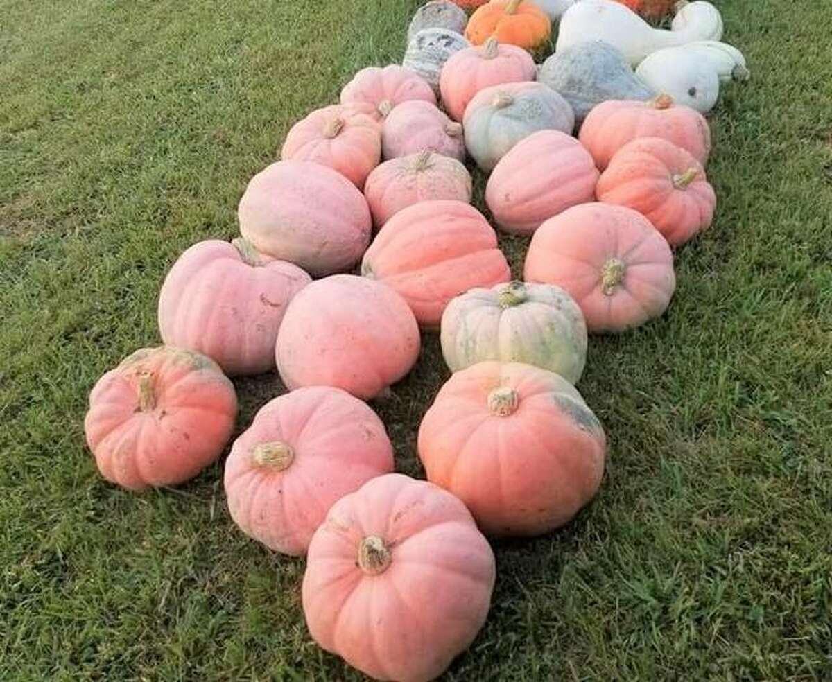 August brings thoughts of fall, even as summer heat is still on. Rinkel Pumpkin Farm, 2762 Old Troy Road, in Glen Carbon, is ready for the change of season, holding its Vendor Fair from 10 a.m. to 5 p.m. Saturday and Sunday. All vendor types will be there! Admission for the event is an item or a monetary donation to the Glen-Ed Food Pantry. Rinkel Pumpkin Farm encourage you to bring non-perishable food items. Follow the farm on Facebook for more information.