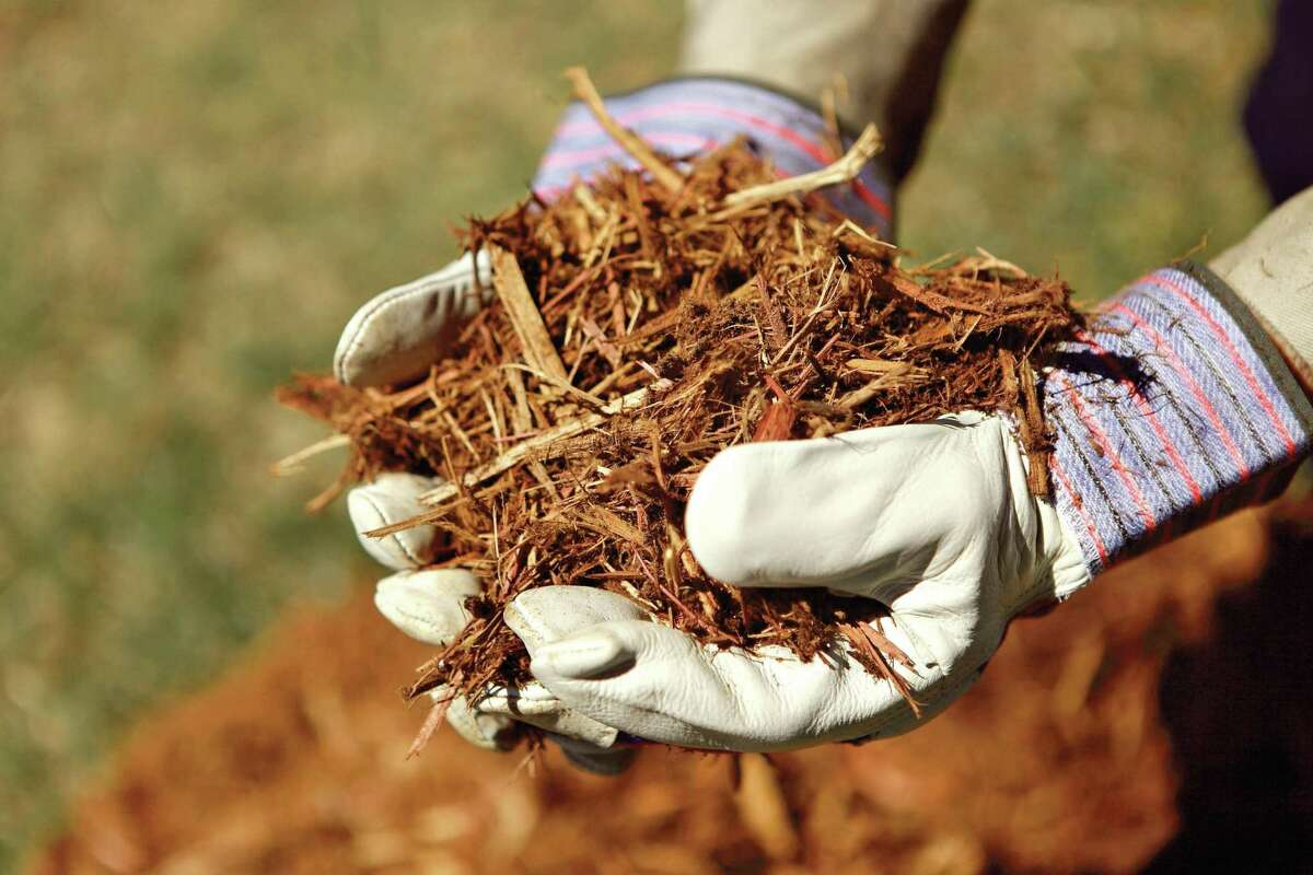 Construction of biomass plants is rising in part because of changes in federal energy policy.