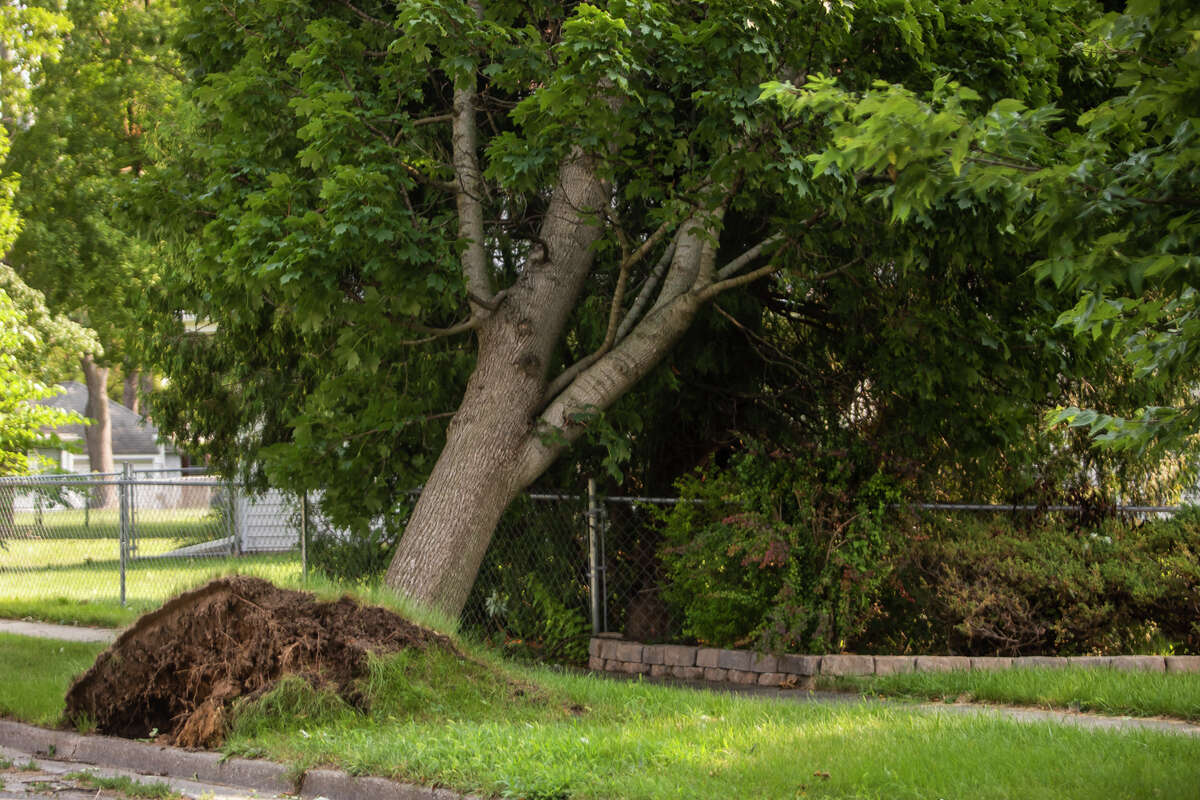 Midland residents work to remove storm debris from their homes, sidewalks and streets Wednesday, Aug. 11, 2021 after a severe thunderstorm the night before. (Katy Kildee/kkildee@mdn.net)