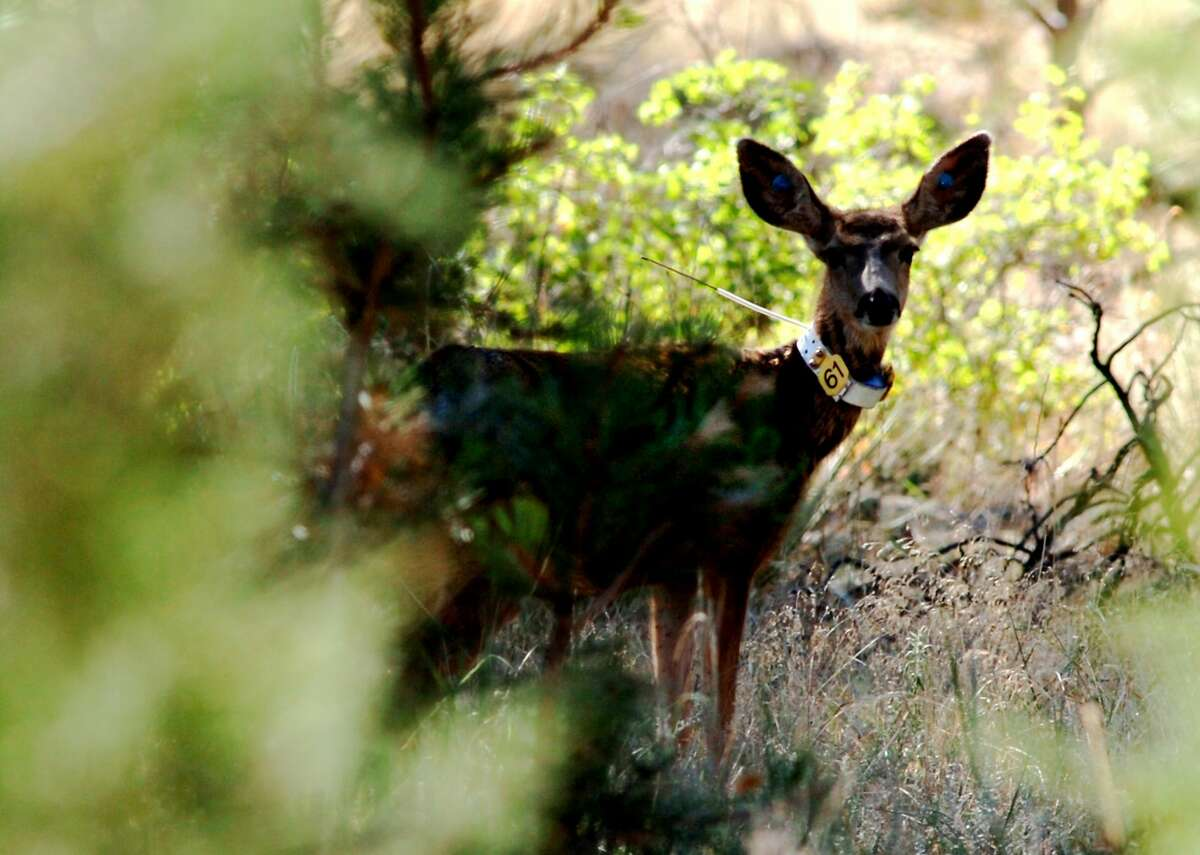 The Michigan Department of Agriculture and Rural Development has confirmed one case of chronic wasting disease at a farmed deer facility in Mecosta County.
