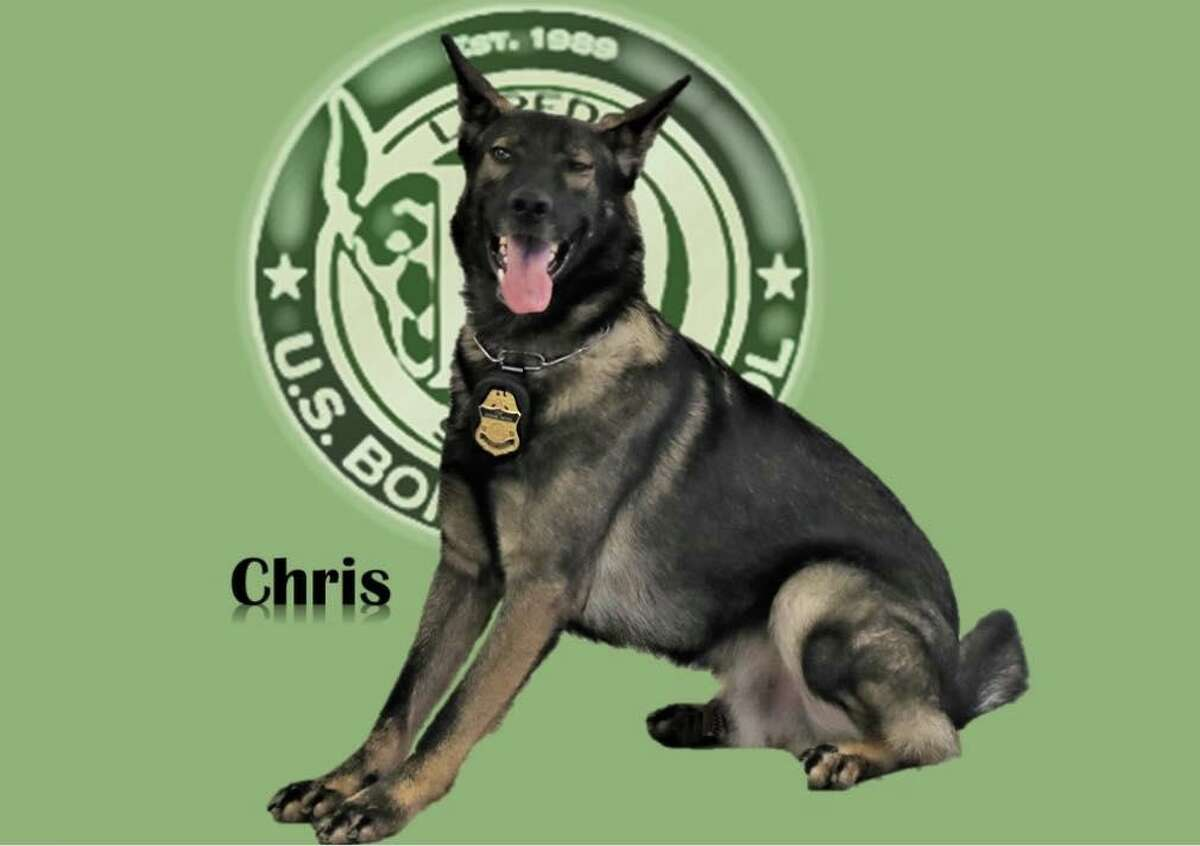 """""""Canine Chris"""" detected 19 migrants hidden inside a tractor-trailer earlier this week, according to the U.S. Border Patrol."""