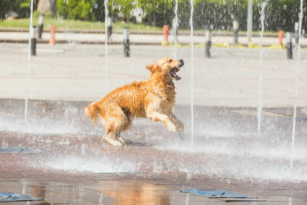 Make sure your four-legged friend has plenty of water during the heat wave.