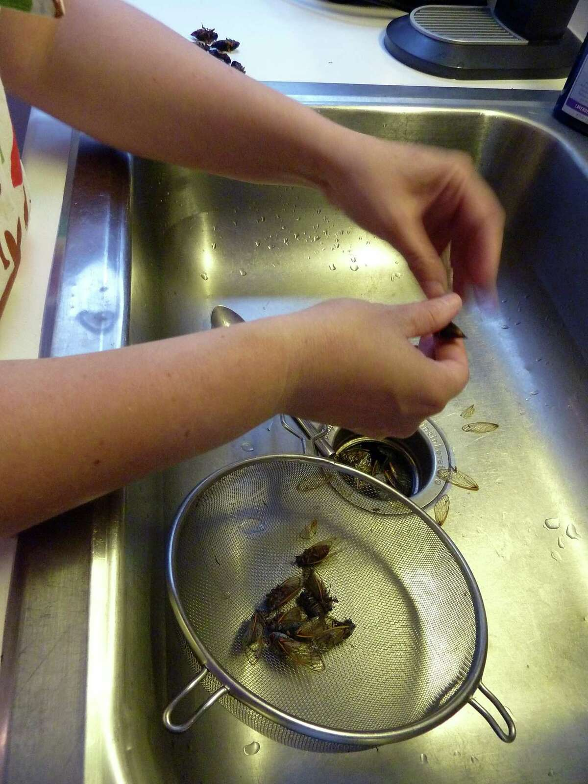 """Biologist Jenna Jadin plucks wings and legs from blanched cicadas at her Washington, D.C. home in 2013. Jadin wrote """"Cicada-Licious: Cooking and Enjoying Periodical Cicadas"""" in 2004."""