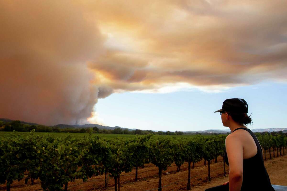 Cristina Flores of Windsor watches as large plumes of smoke from the Walbridge Fire in Sonoma County wafts over vineyards west of Healdsburg last August. That smoke - irritating to many people - has also shown a correlation with coronavirus infections and deaths, a new study concludes.