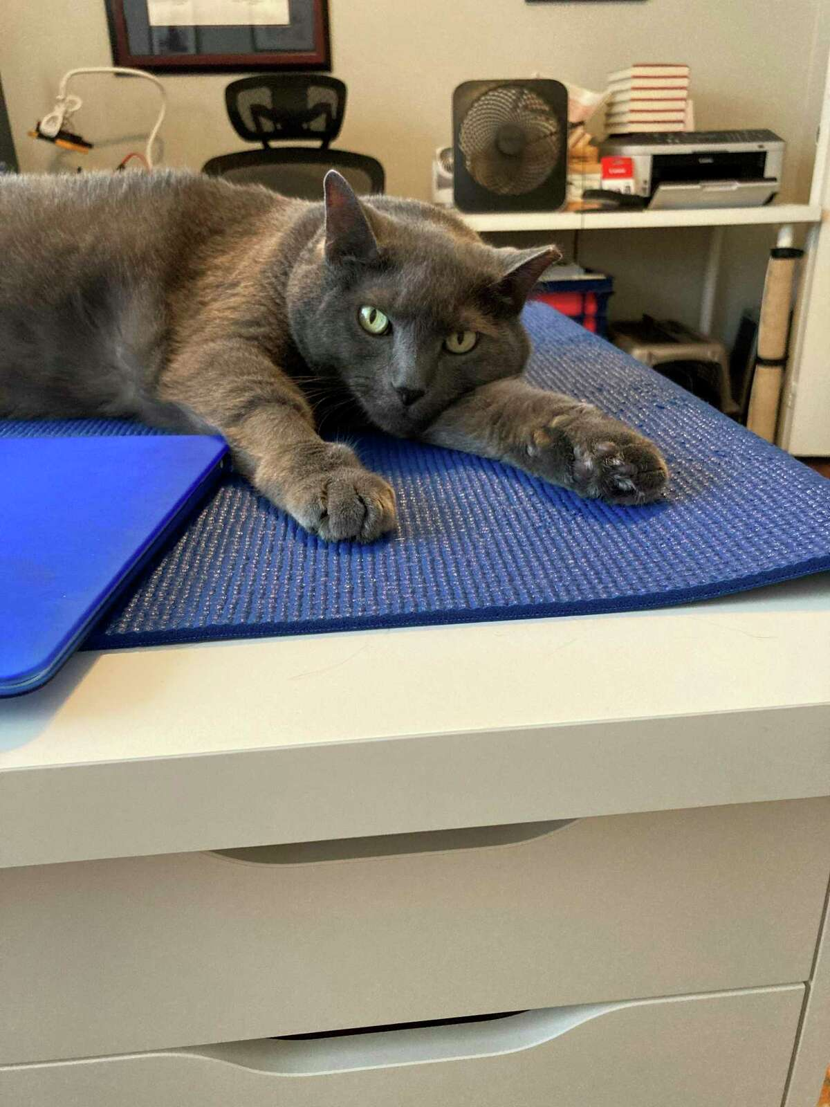Jennifer Latson's cat Larry on her desk at her work from home office.
