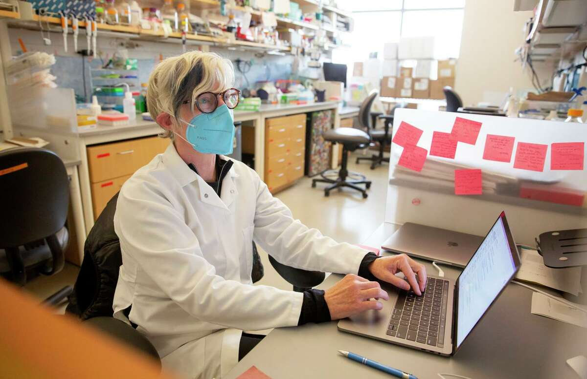 Stacia Wyman, a senior scientist, looks over visualizations of an evolutionary tree of the COVID-19 viral genomes at the Innovative Genomics Institute in Berkeley in January.