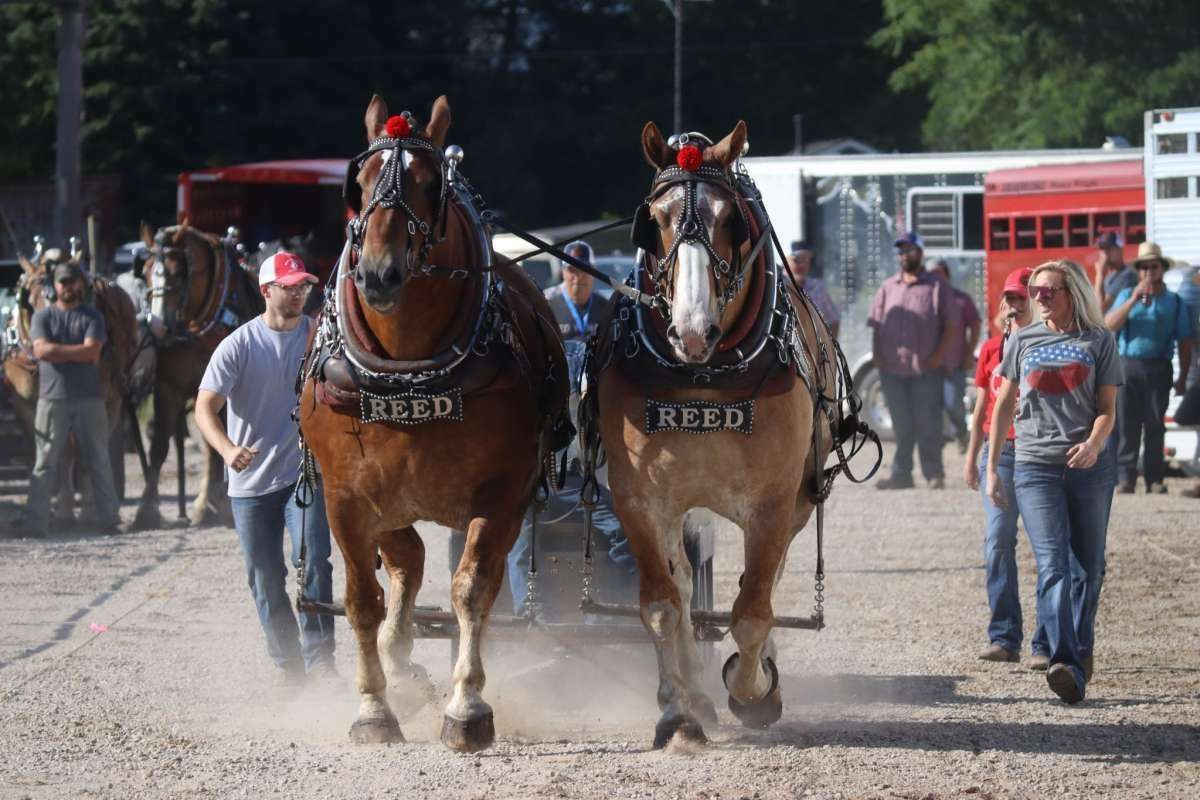 File - Ben Reed, whose family has been involved with horse pulling for generations, is organizing this year's draft horse pull event at the fair.
