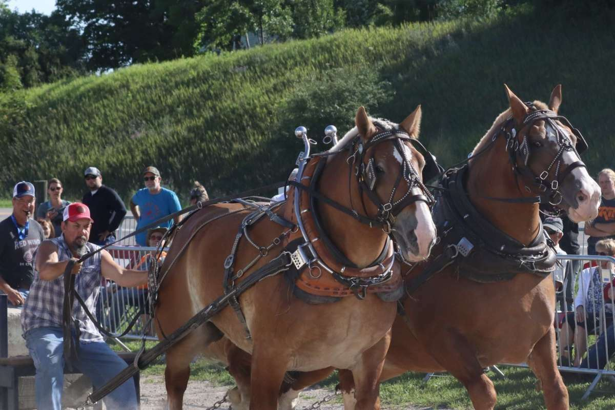 File - Teamsters and their Belgian Draft Horses will take part in the heritage horse pull competition at 7 p.m. on Aug. 17.