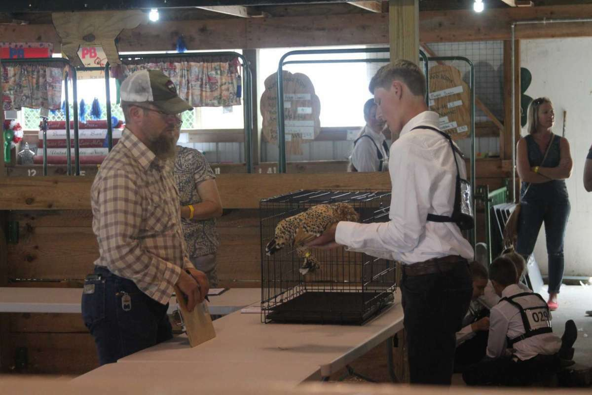 File - This year, 4-H poultry and bird judging will took place on Aug. 18.