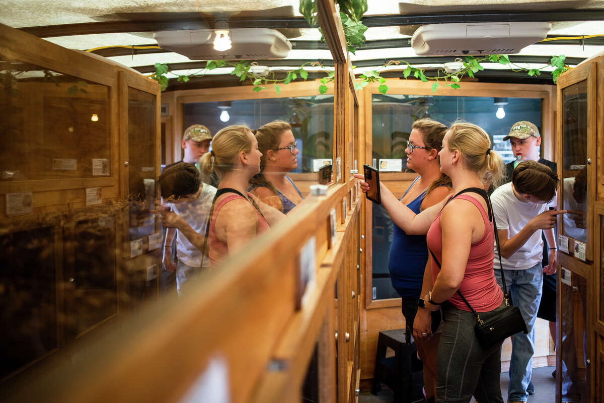 Fairgoers take a look at exotic reptiles and amphibians, before watching the first of three daily shows presented by Tim Muxlow, owner of Muxlow Exotics, on Monday, Aug. 16, 2021 at the Midland County Fair. (Katy Kildee/kkildee@mdn.net)