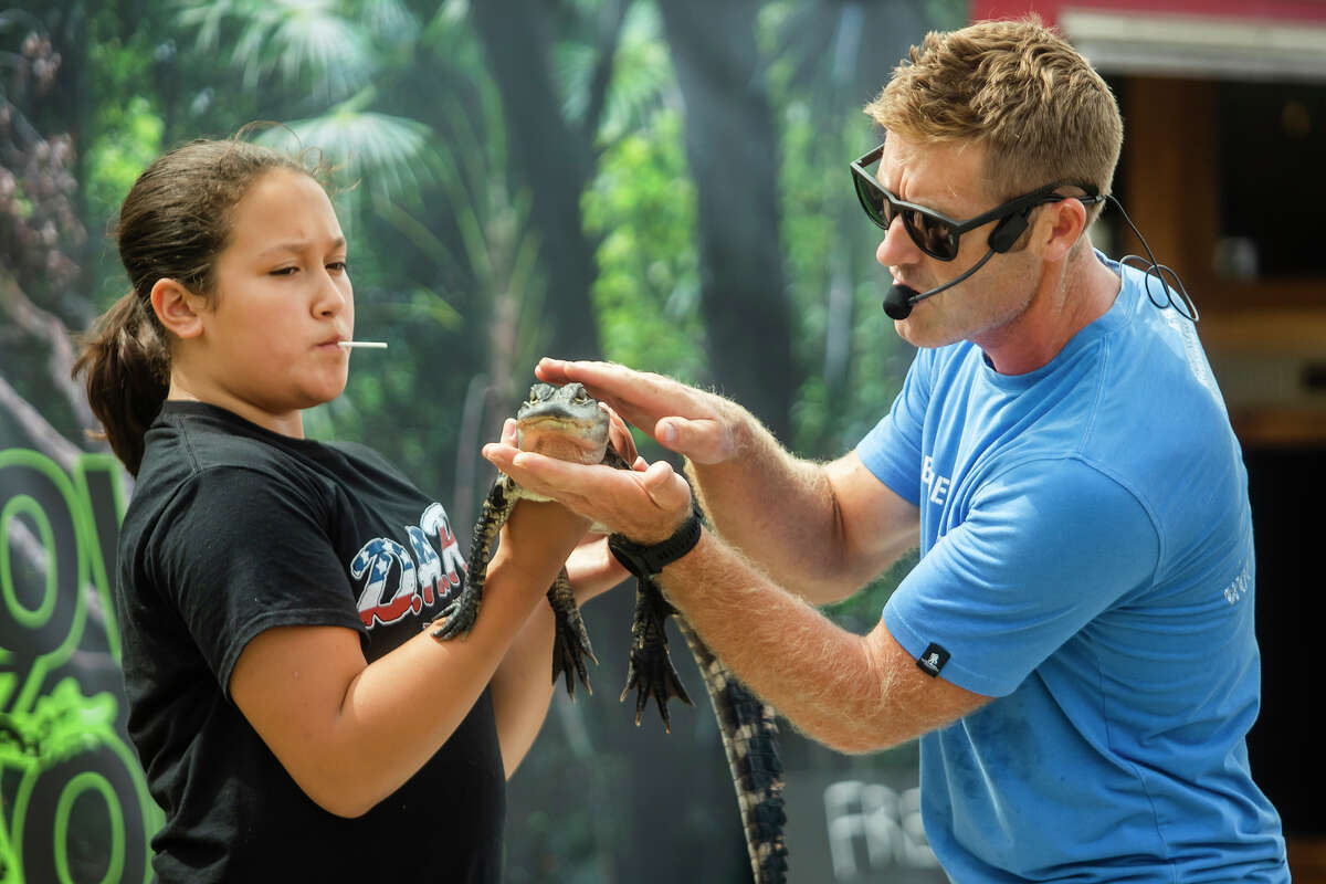Kenley Guza of Coleman, 10, left, holds an American alligator as Tim Muxlow, owner of Muxlow Exotics, right, talks about the animal's teeth during the first of three daily reptile and amphibian shows on Monday, Aug. 16, 2021 at the Midland County Fair. (Katy Kildee/kkildee@mdn.net)