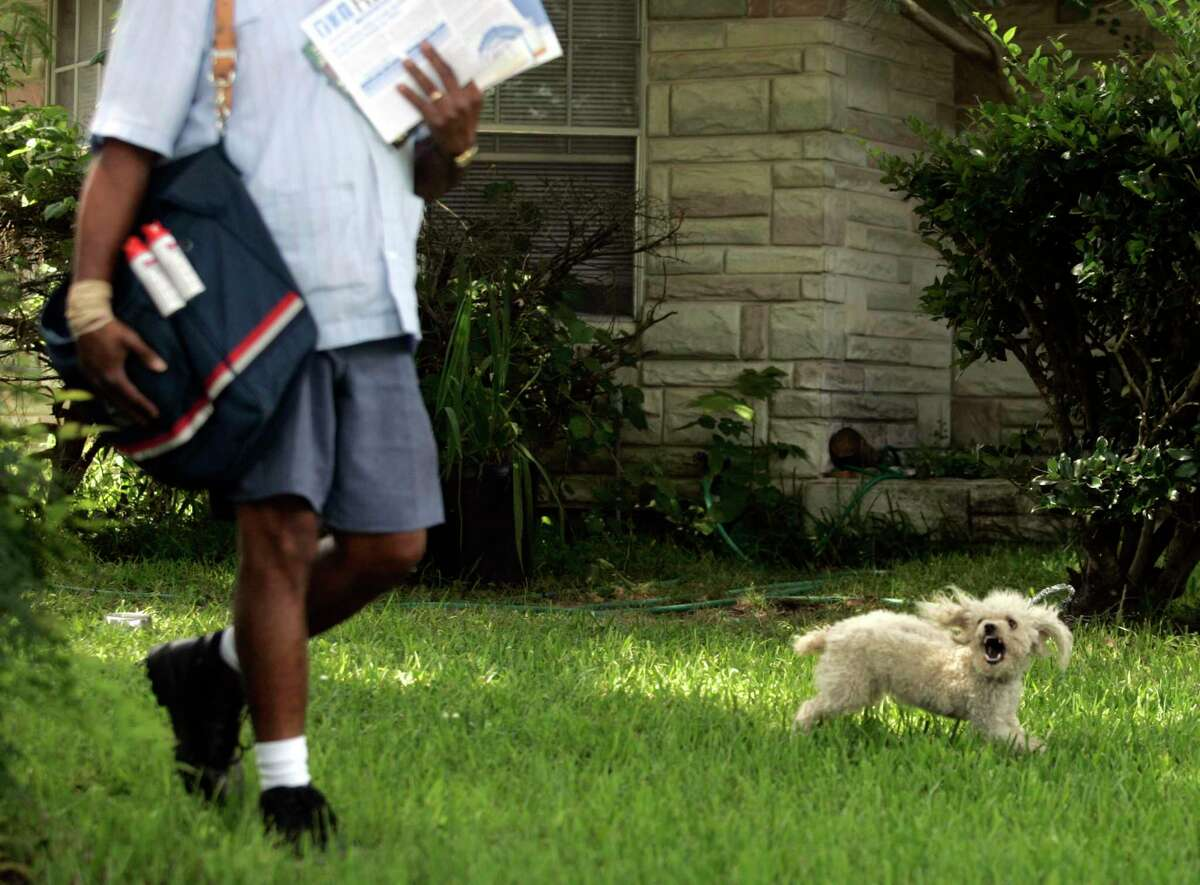 A U.S. Postal carrier walks past a puddle while on his route in Houston.