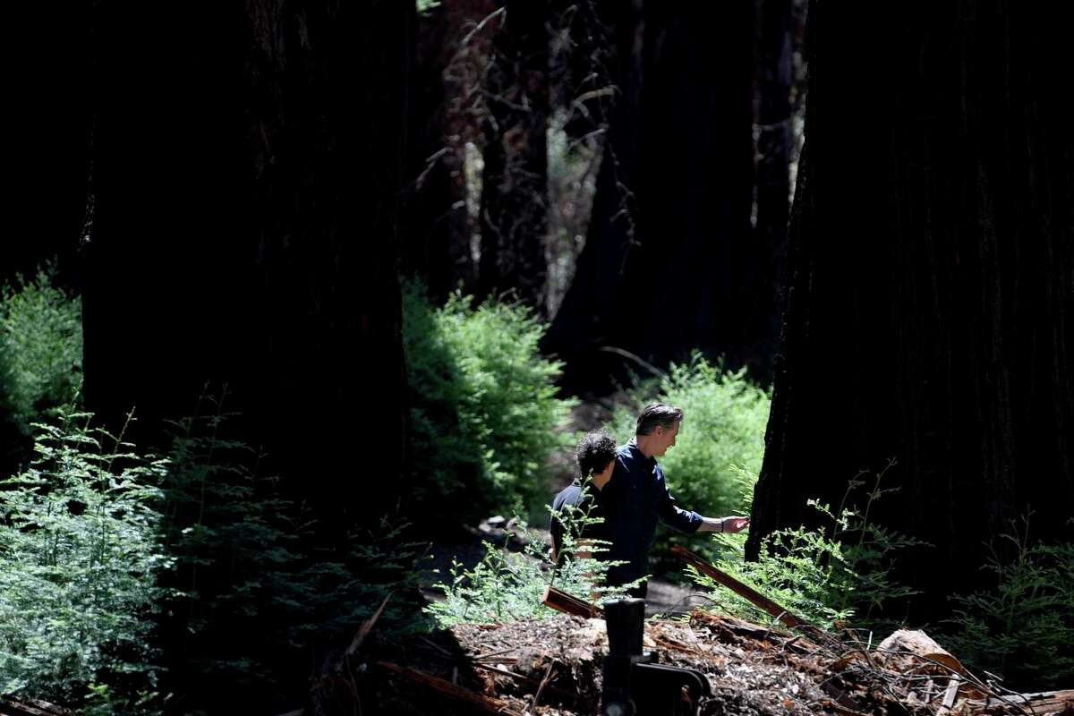 California Gov. Gavin Newsom (right) walks through Big Basin Redwoods State Park on Tuesday. The 18,000-acre park with scarred by the CZU Lightning Complex fires last year.