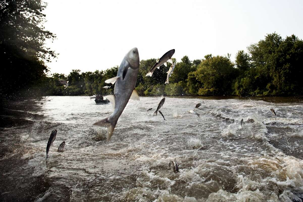 FILE - Bath, Ill.'s riverfront and beach during the Asian Carp fishing contest on Aug. 6, 2010 in Bath, IL. (Photo by Benjamin Lowy/Getty Images)