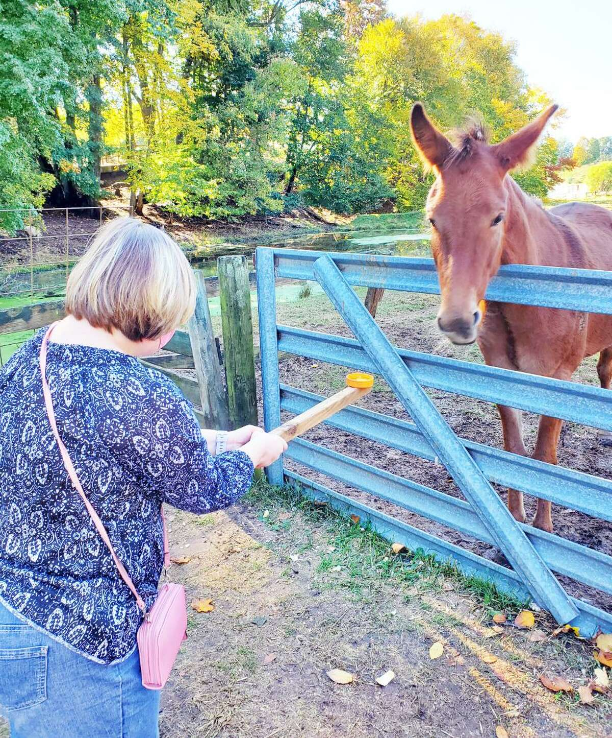 A client in MARC Community Resources' Adult Skills program feeds a horse. The agency just opened its new offices at 53 Industrial Park in Middletown.