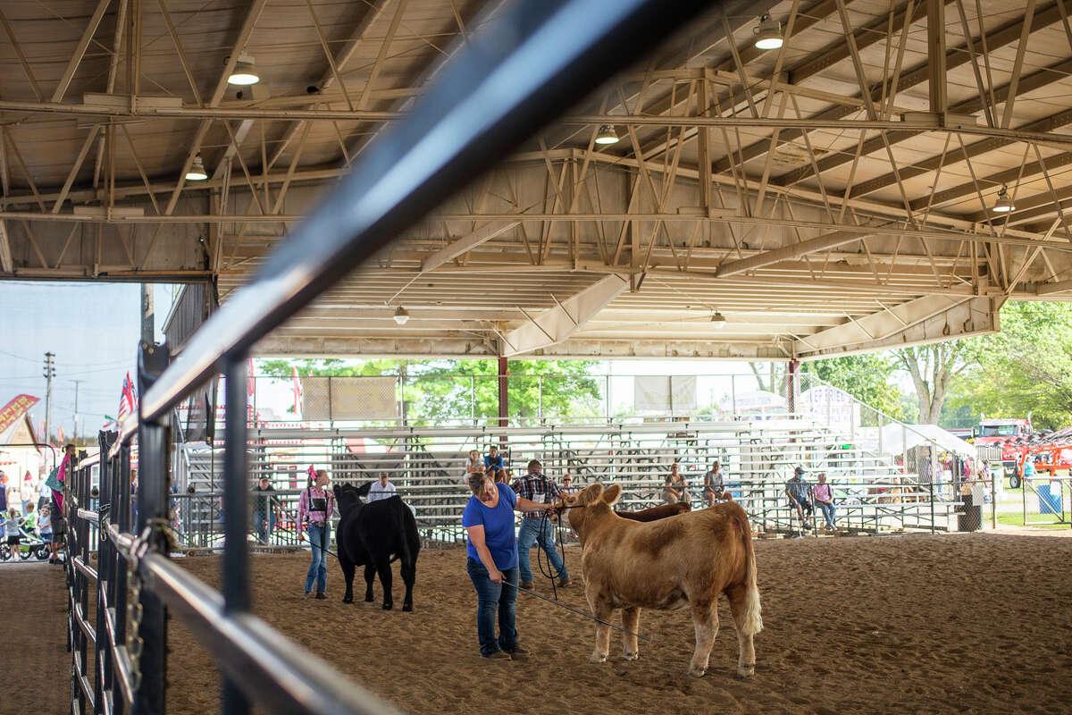 Children show their 4-H animals Wednesday, Aug. 18, 2021 at the Midland County Fair, which continues through Saturday. (Katy Kildee/kkildee@mdn.net)