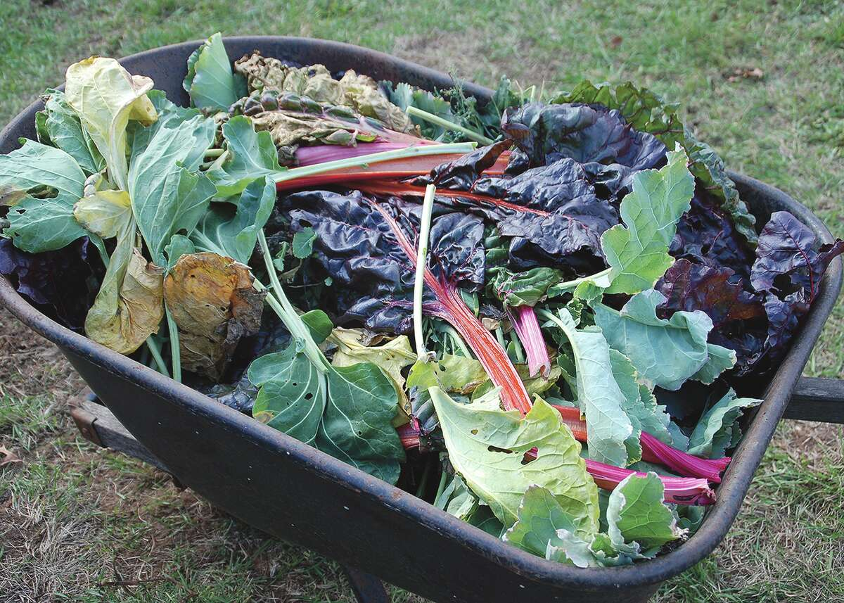 Composting can be as simple as collecting disease- and insect-free plant debris, placing it in a pile and letting it rot.