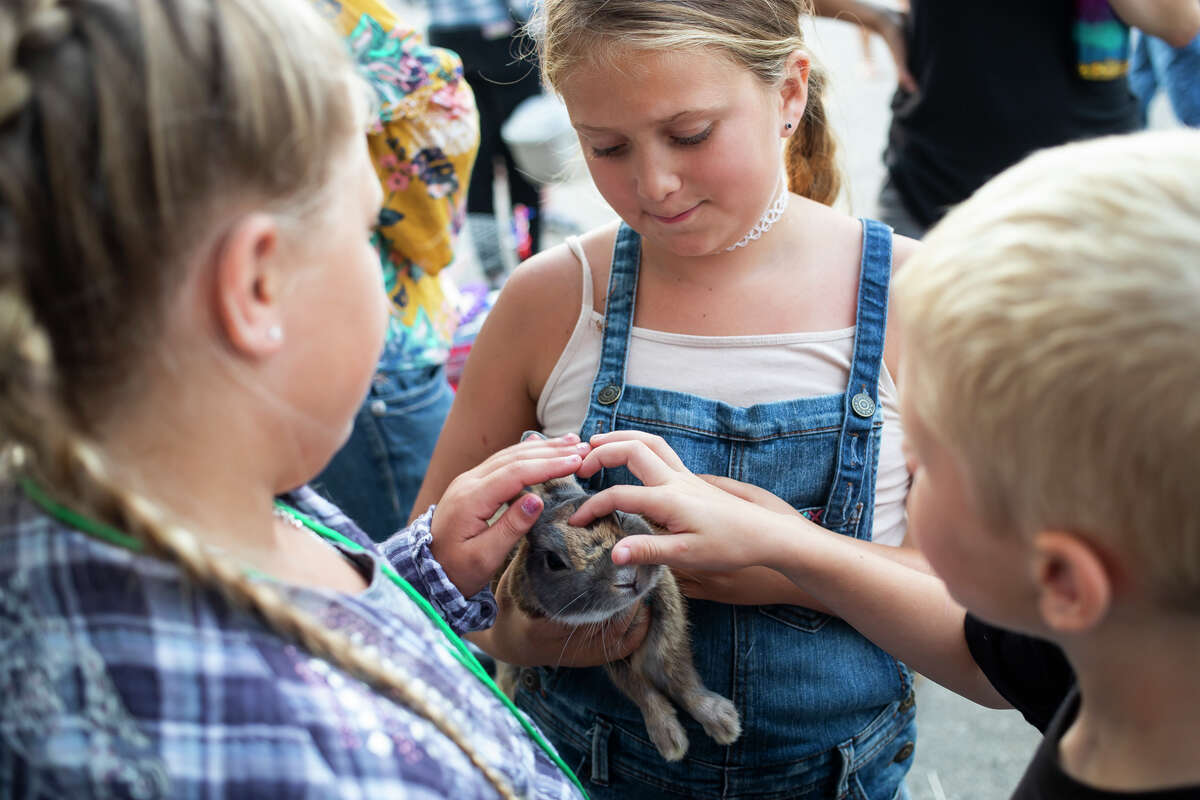 From left, Ty Tyler of Saint Louis, 9, Braylee Keith of Shepherd, 10, and Henry Roberson of Freeland, 7, pet Tyler's rabbit before it's auctioned off during the Midland County Fair small animal auction Wednesday, Aug. 18, 2021 at the Midland County Fairgrounds. (Katy Kildee/kkildee@mdn.net)