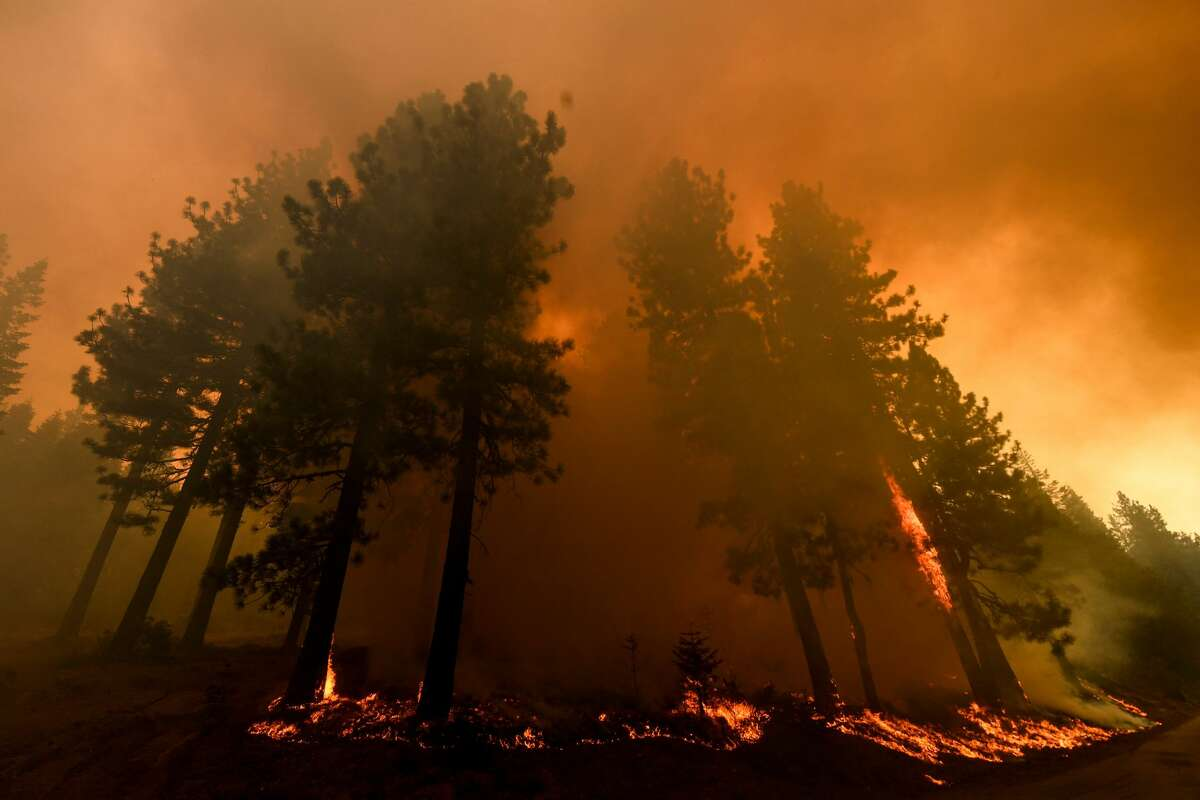 Trees burn on a hillside during the Dixie Fire on Aug. 18, 2021 in the Plumas National Forest near Janesville, California.