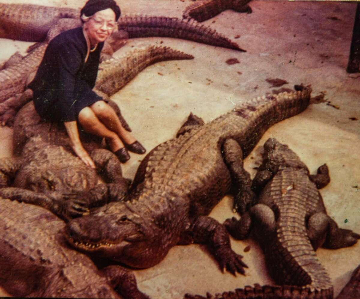 Vera Kimbrell sits among the gators at Alligator Garden. She and her husband operated the Alligator Garden, a roadside attraction that was on Broadway next to the Witte Museum from the early 1950s through the mid-'70s. The cold-blooded reptiles become dormant during winter months, allowing people to get surprisingly close to them.