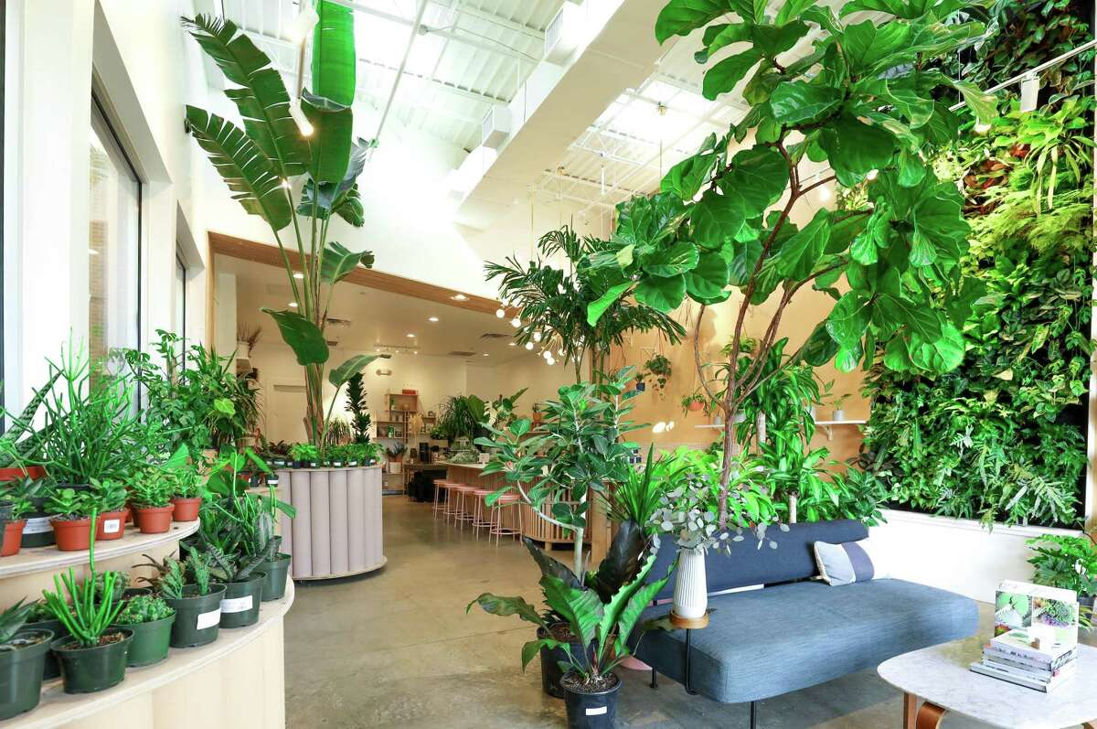 The Flora Culture is located at 799 Town and Country Boulevard, Suite 143