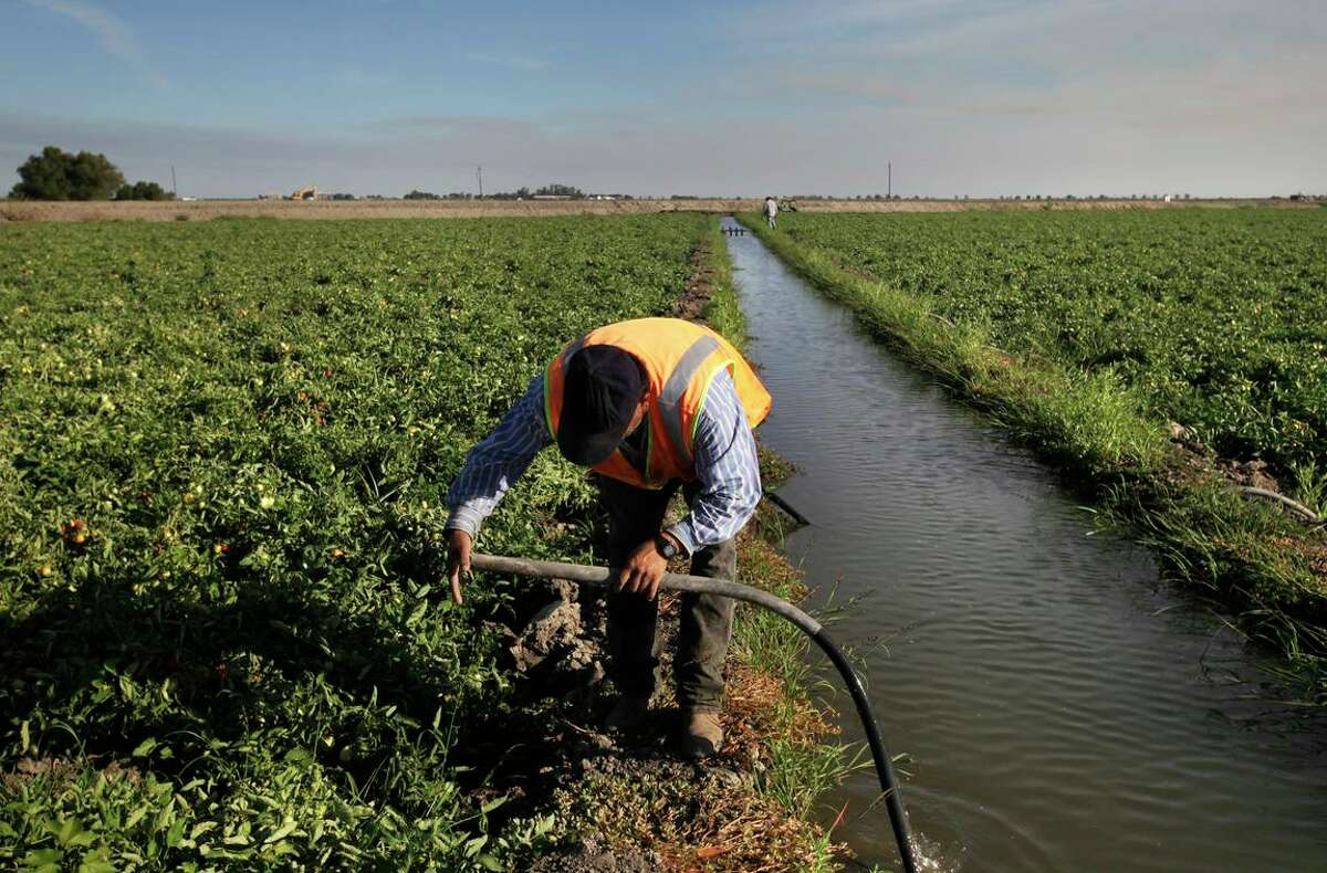 A worker suctions water as part of the furrow irrigation process for tomatoes in Los Banos on a farm that gets some of its water from the San Joaquin River.