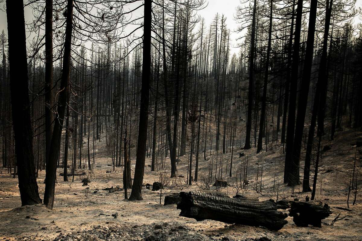 The trees are charred and the ground is ash in Humbug Valley after the Dixie Fire swept through Maidu land in Plumas County, California on Thursday, Aug.19, 2021. Humbug Valley, part of the Maidu's ancestral homeland, burned when the Dixie Fire swept through the area just two years after the land was reacquired from PG&E.