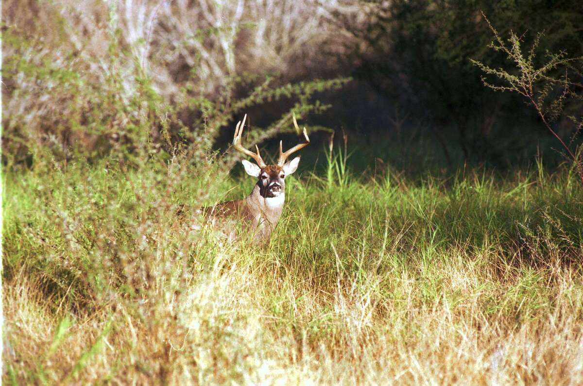 The 2021-22 archery season for white-tailed deer starts Oct. 2. and the general season gets underway statewide on Nov. 6.