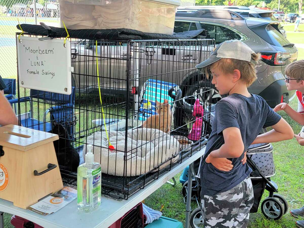 Community Cats of Benzie County were at the Frankfort Art Fair so people could have the opportunity to adopt a new furry friend. (Colin Merry/Record Patriot)