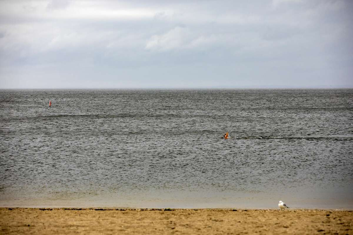 A person swims at Compo Beach in Westport during Tropical Storm Henri on Aug. 22, 2021.