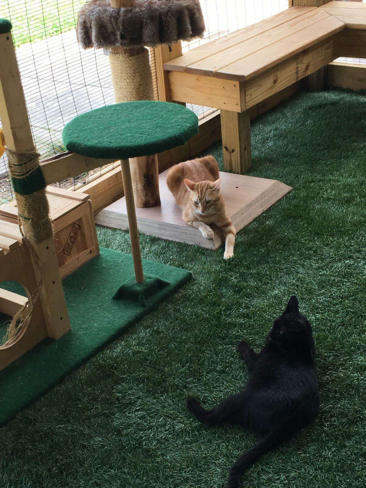 A popular trend in the last few years is the addiction of a catios to the home. Catios are screened-in porches for cats, and the ideal catio has a patch of grass, ledges for the cat to move up and down and around and places to snooze.