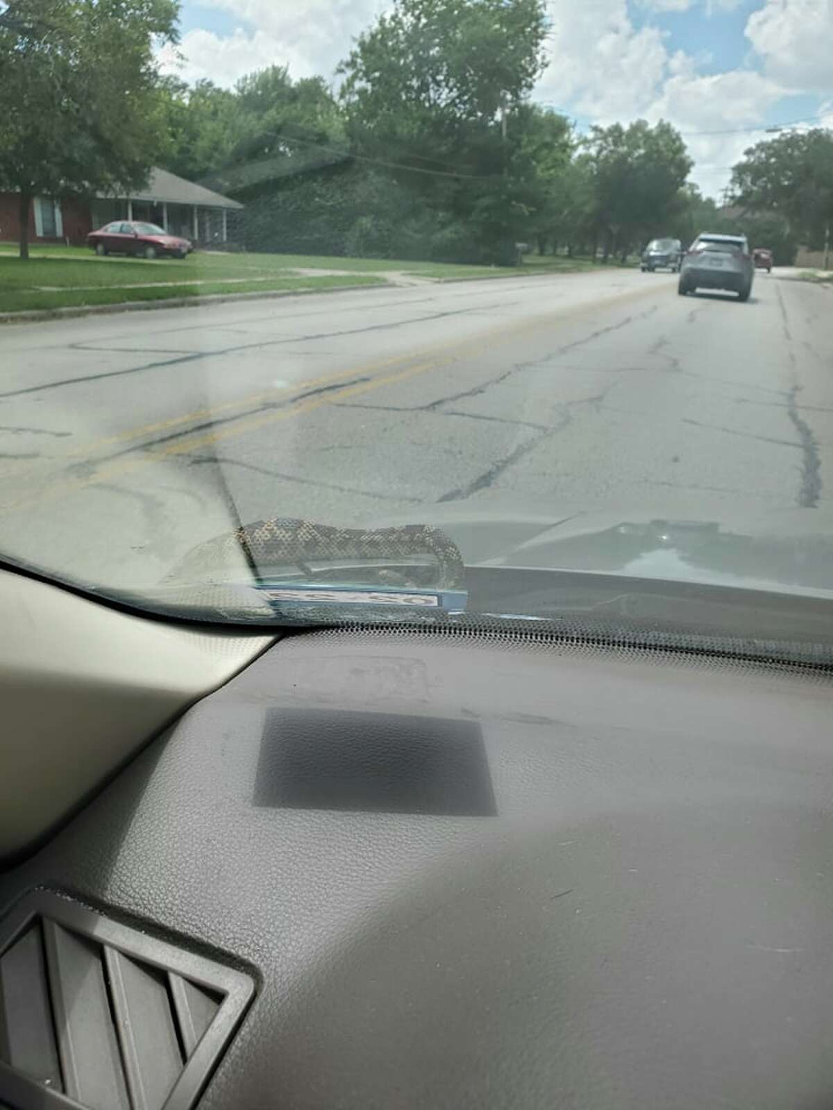 Enzo Sanchez captured photos of a 3-foot snake coming out of his car while driving in Lockhart.