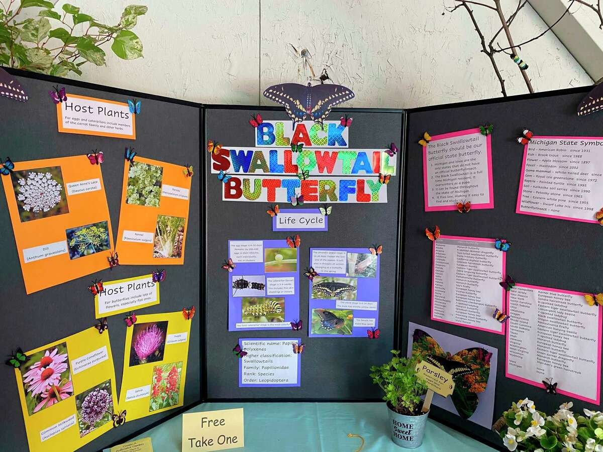 """Spirit of the Woods Garden Club Inc.'seducational exhibit, """"Black Swallowtail Butterfly""""wona blue ribbon at the Manistee County Fair.(Courtesy photo)"""