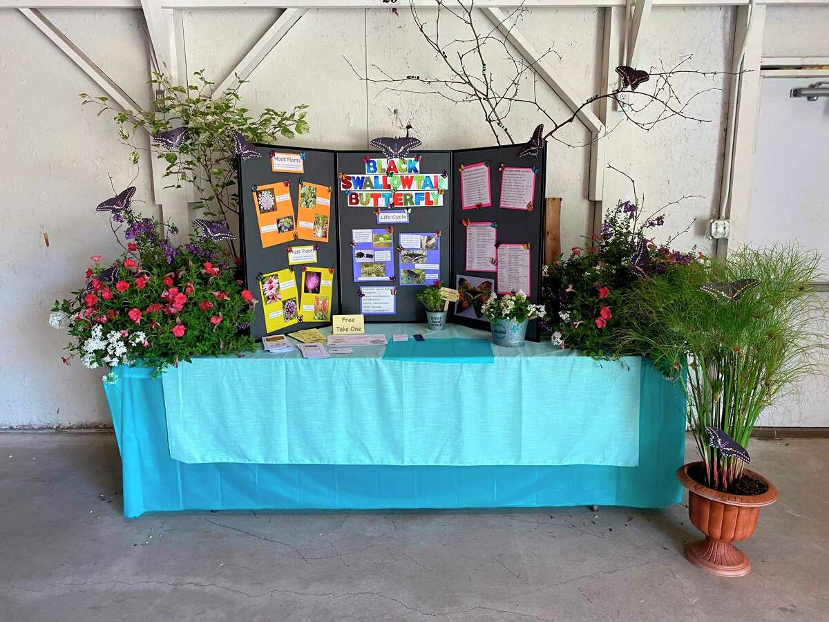 """Spirit of the Woods Garden Club Inc.received a blue ribbon at the Manistee County Fair for its educational exhibit, """"Black Swallowtail Butterfly"""". (Courtesy photo)"""