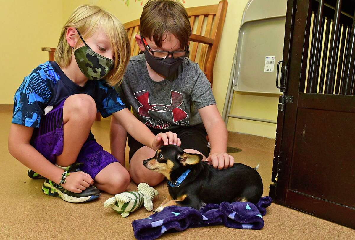 Van and Crew Szwaba, 7 and 9 of Fairfield, meet with Sugar, a chihuahua that is up for adoption at PAWS Tuesday, August, 23, 2021, in Norwalk, Conn. Clear the Shelters Week was extended this year to a month-long process due to the pandemic.
