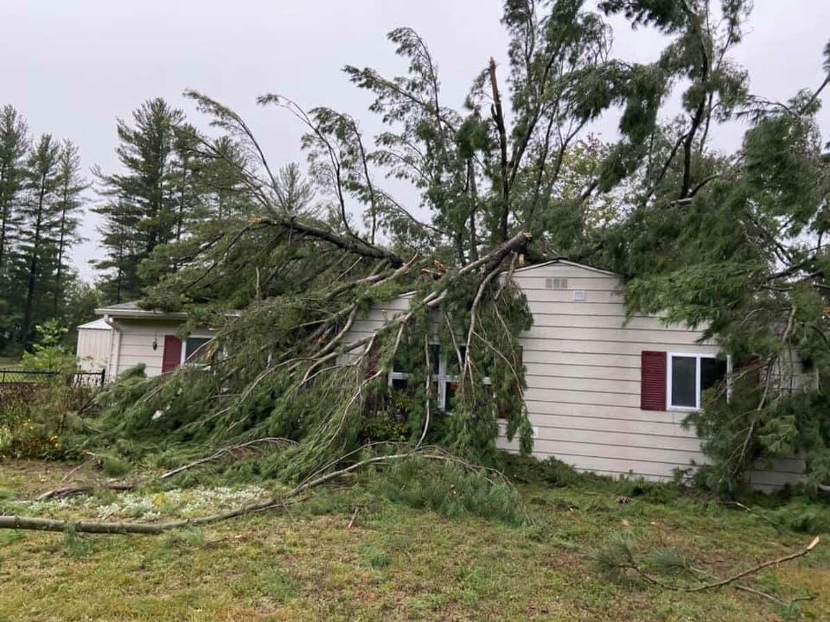 A big pine tree fell on a Wixom house last night.