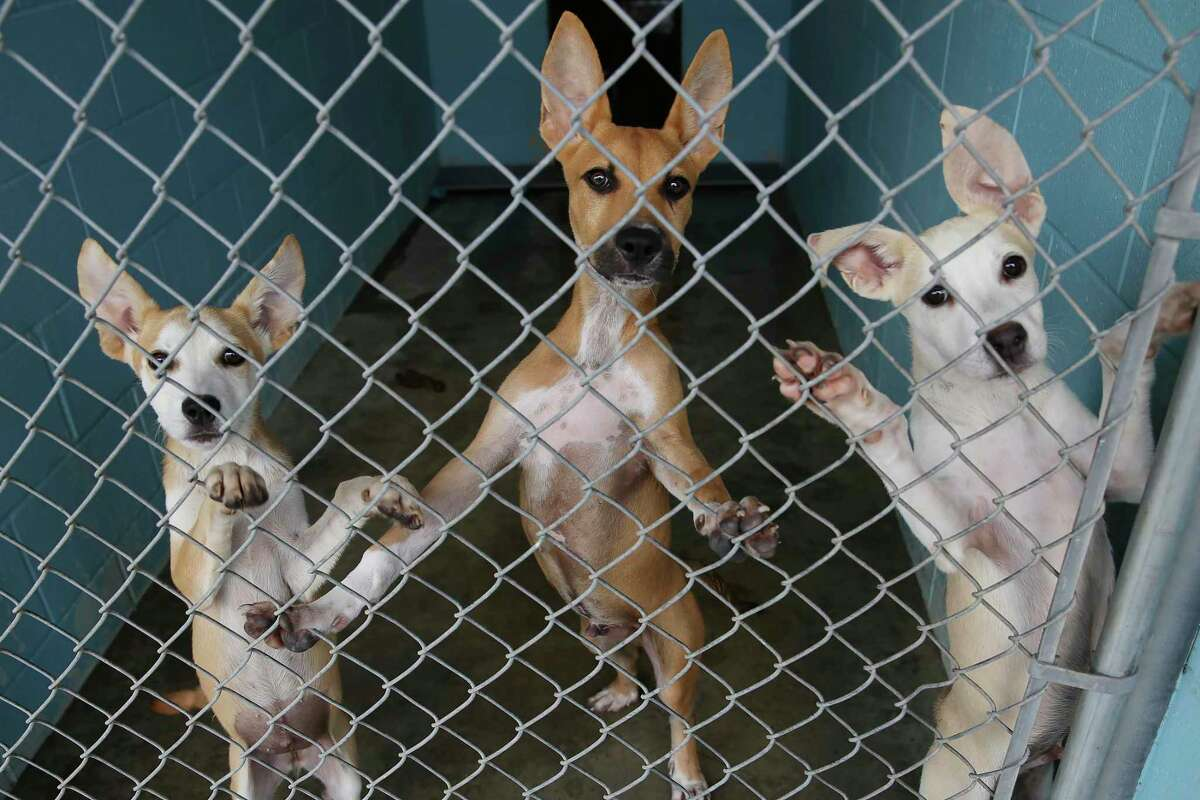 Siblings share a kennel Wednesday, Aug. 25, 2021, at the San Marcos Regional Animal Shelter. The 183-kennel facility is housing 241 animals.