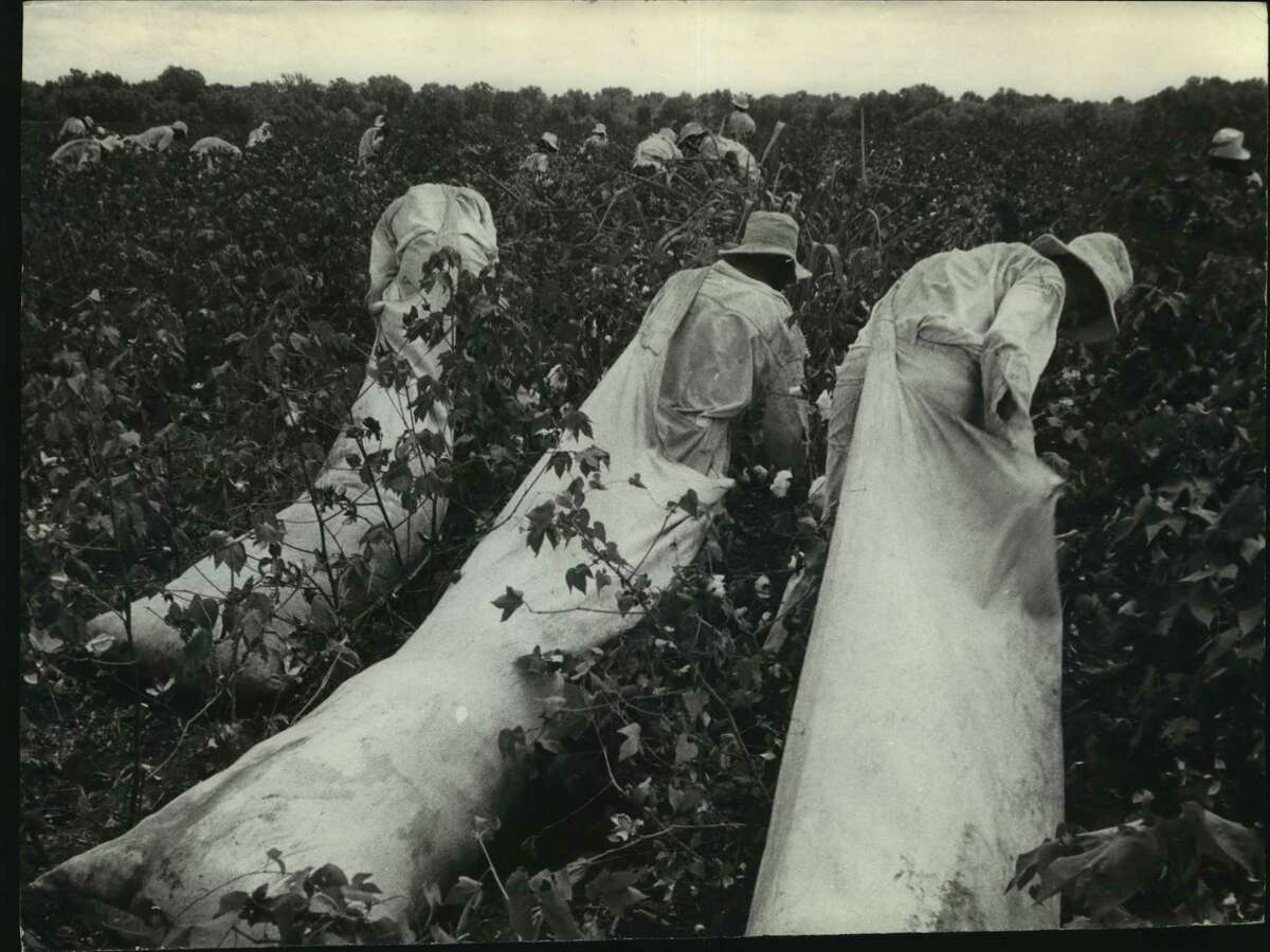Workers in the cotton fields each pick 250-300 pounds of cotton a day in 1962. It's a long road for convicts, many of whom are lifers, but work helps cut their time short. Historical photo. Texas Department of Corrections.