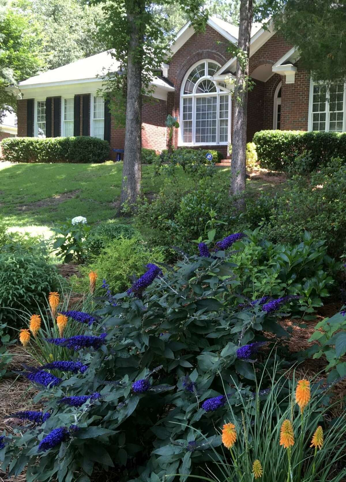 'Pugster Blue' butterfly bush is is partnered with 'Pyromania Orange Blaze' torch lilies in a curbside garden.