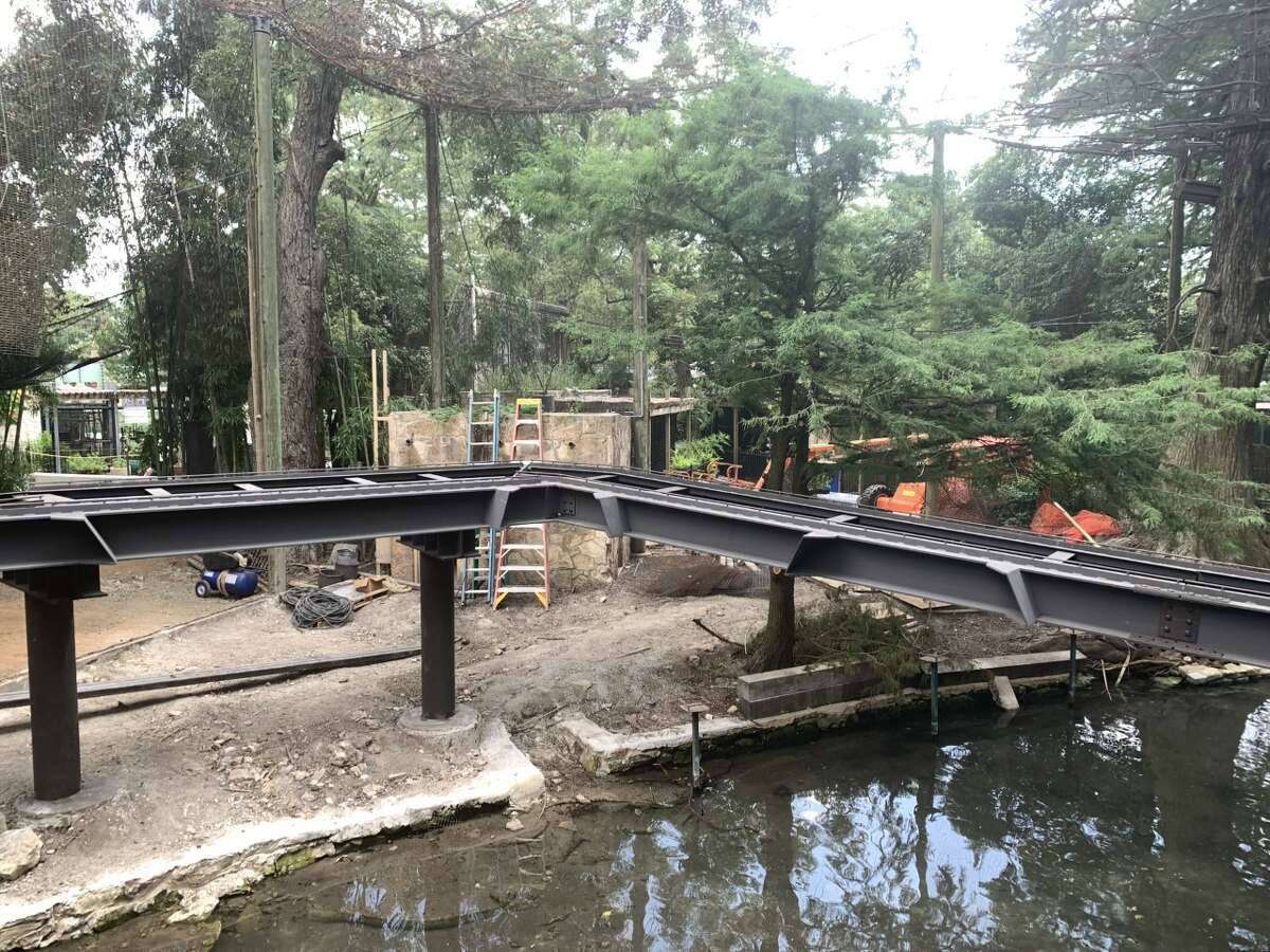 The zoo broke ground on an innovative catwalk in April. Once complete, guests wil be able to see jaguars stalk the tracks overhead San Antonio Zoo CEO Tim Morrow shared exclusive photos with MySA showing the installation of the main track on Thursday.
