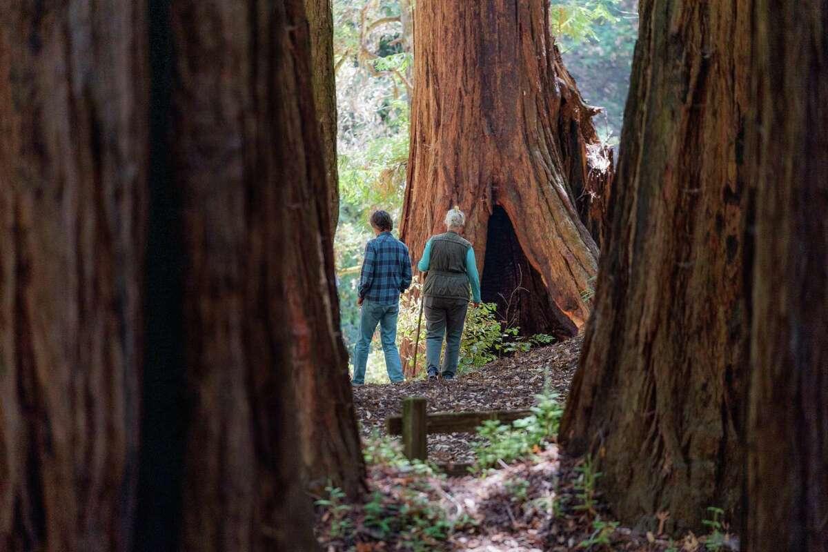 Park visitors walk amongst the redwoods in Memorial Park near Loma Mar, Calif., on Thursday, August 26, 2021.