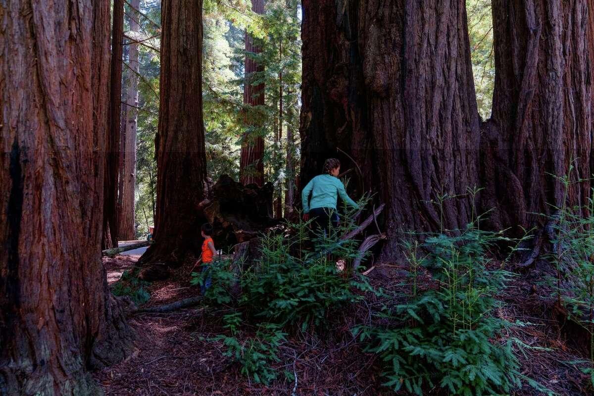 Jayden (left), Levi (center), and Gigi (right) make a fort amongst a redwood grove in Memorial Park near Loma Mar, Calif., on Thursday, August 26, 2021.