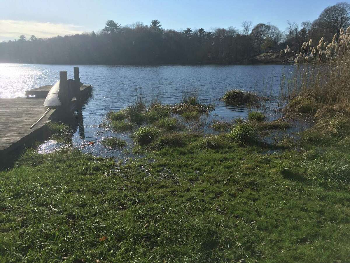 Flooding on Dave Berggren's property in Old Lyme last year. Berggren said the rising water on Black Hall Pond is the result of beavers that build dams on a nearby property owned by the Old Lyme Land Trust.